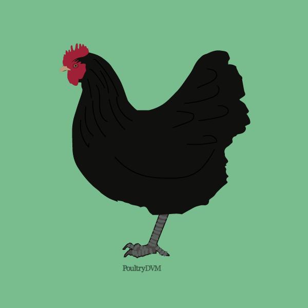 La Gournay Chicken