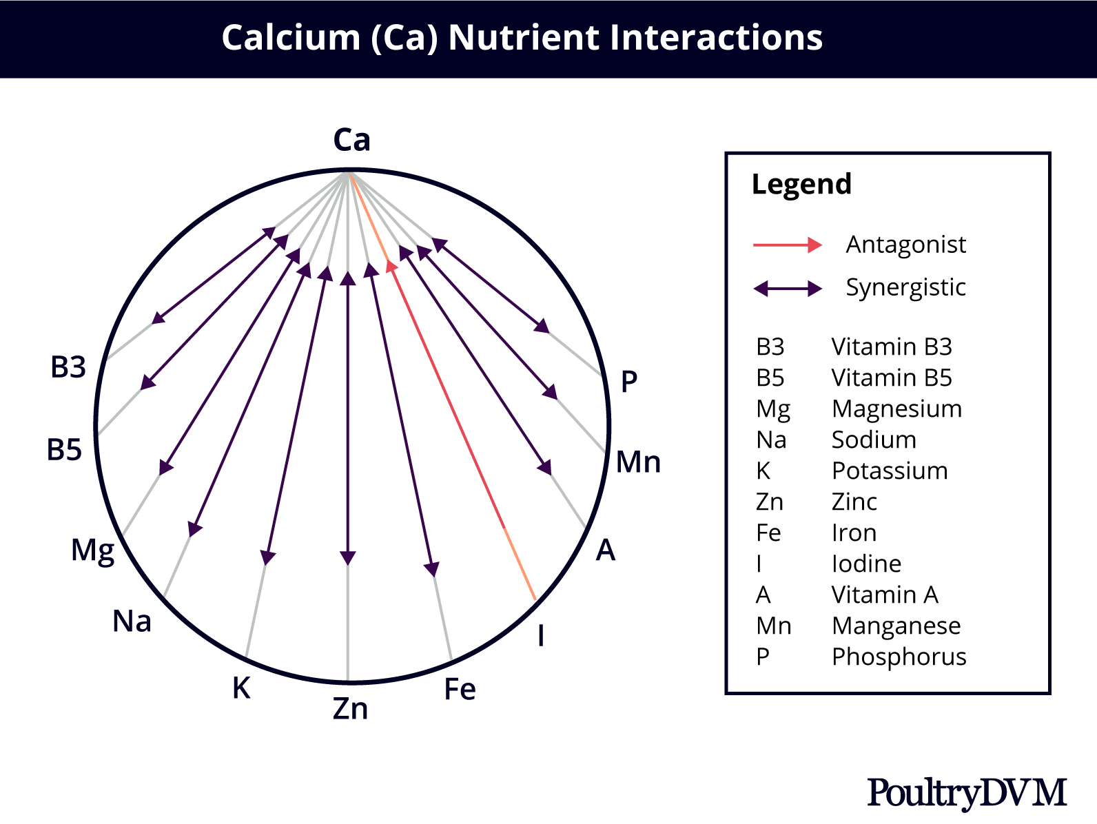 calcium nutrient interactions