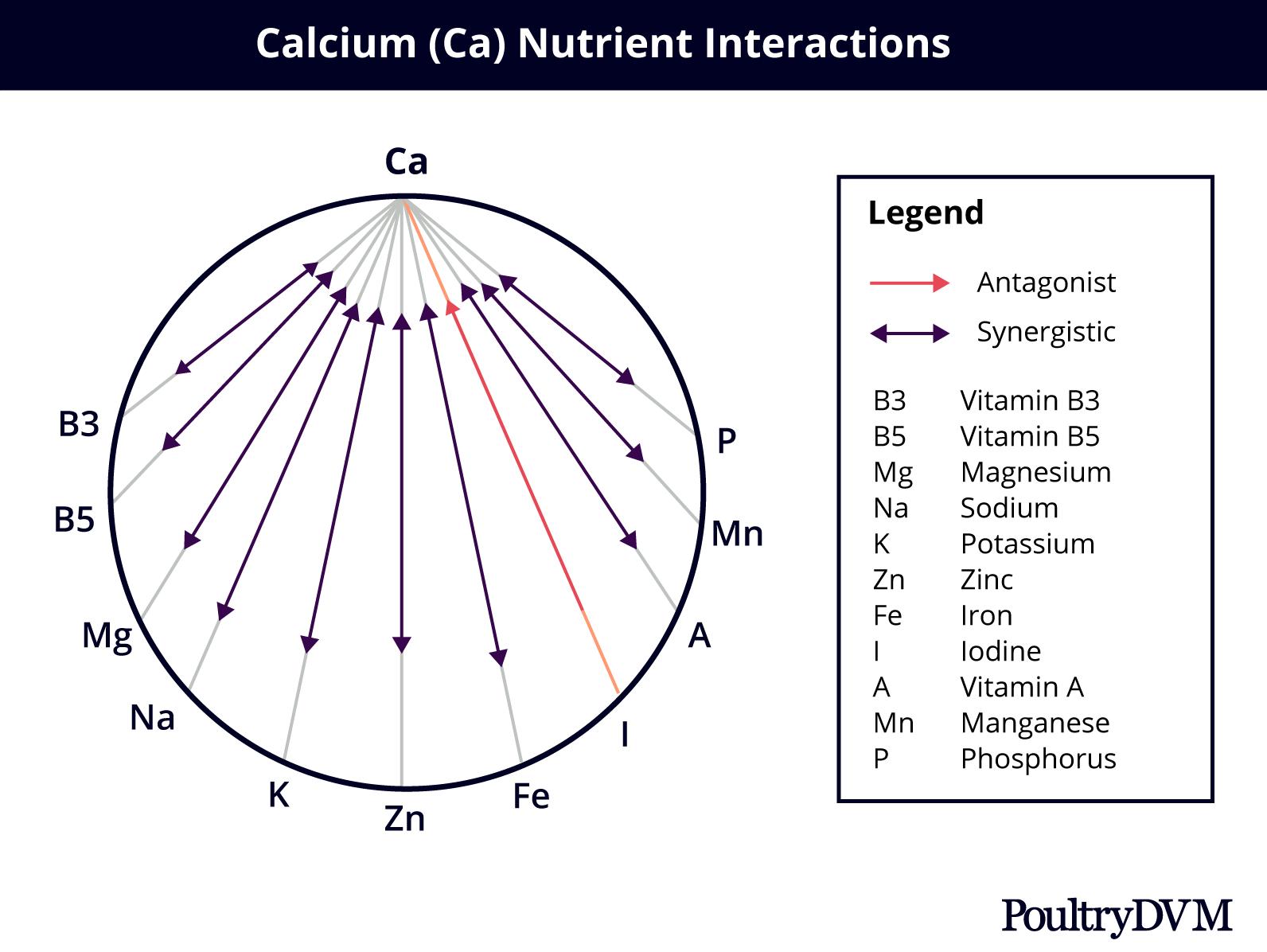 calcium nutrient interactions
