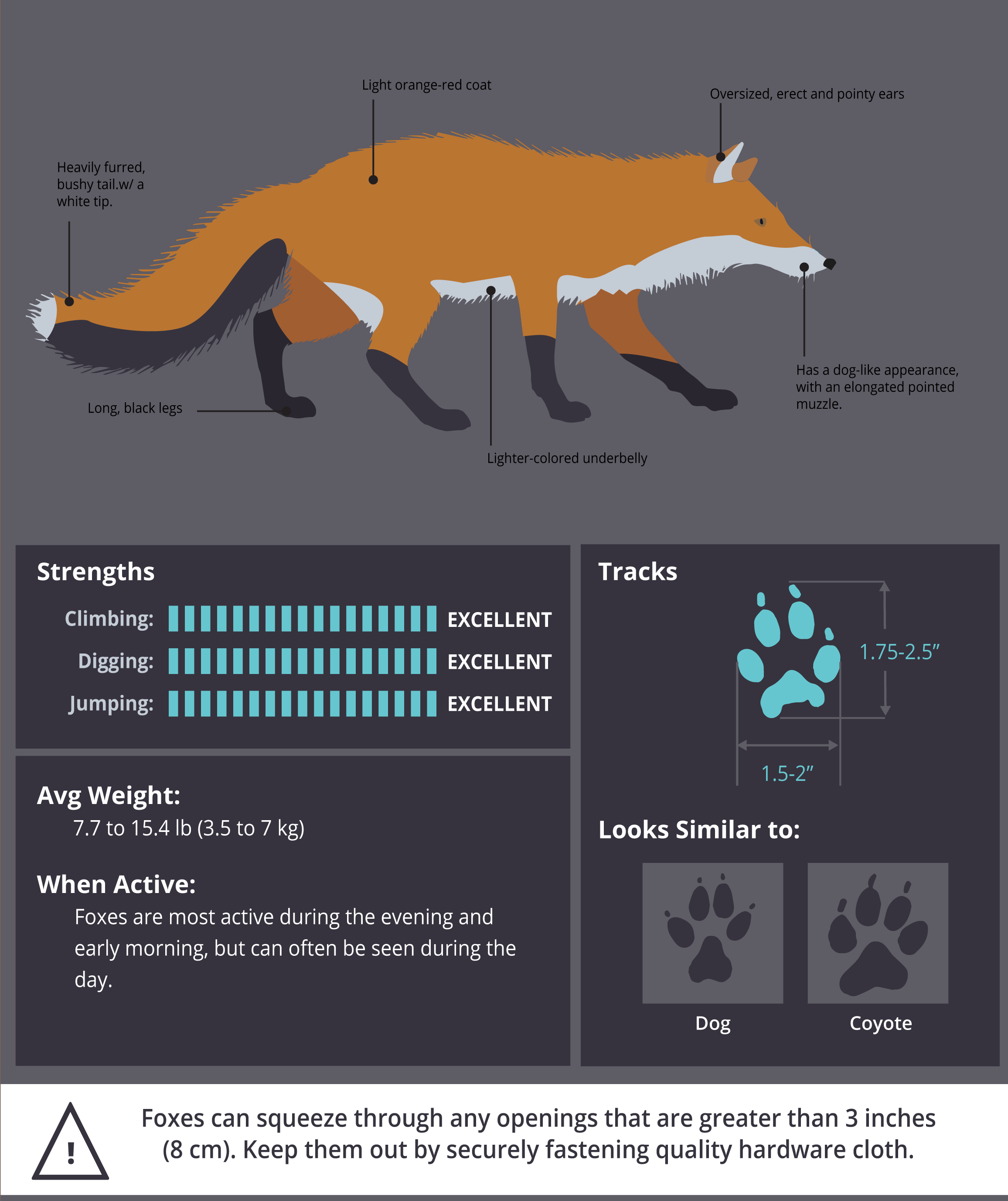 PoultryDVM Predator Profile - The Fox