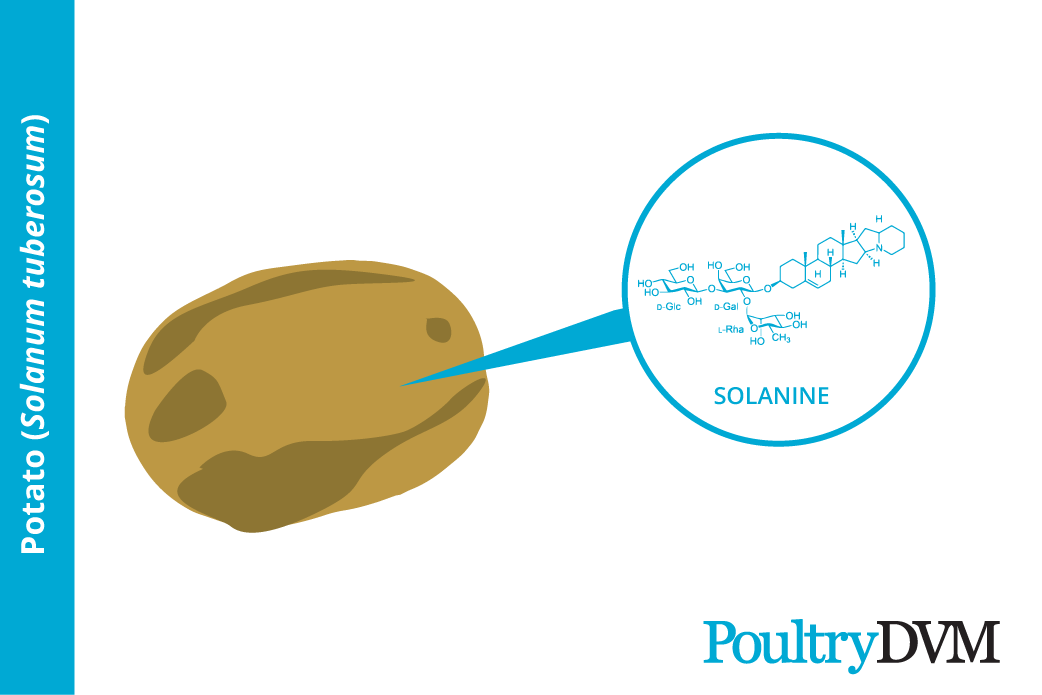 Toxic components in potatoes to poultry