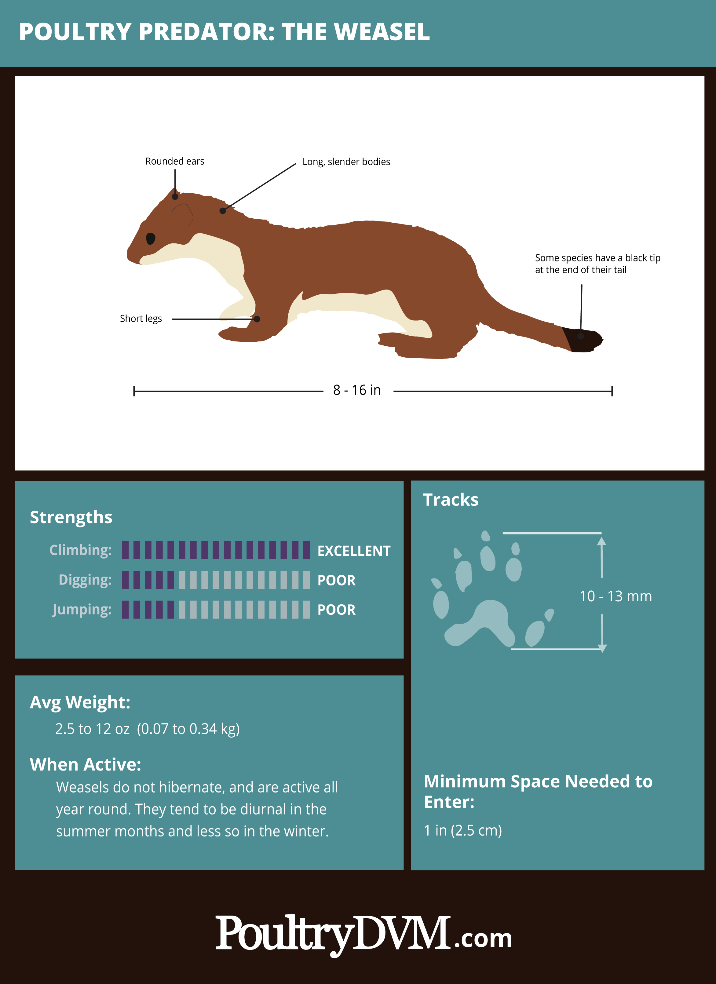 PoultryDVM Predator Profile - The Weasel