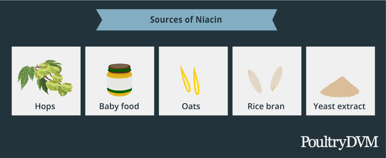 Niacin food sources for ducks