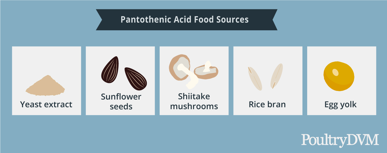 Pantothenic acid food sources for chickens