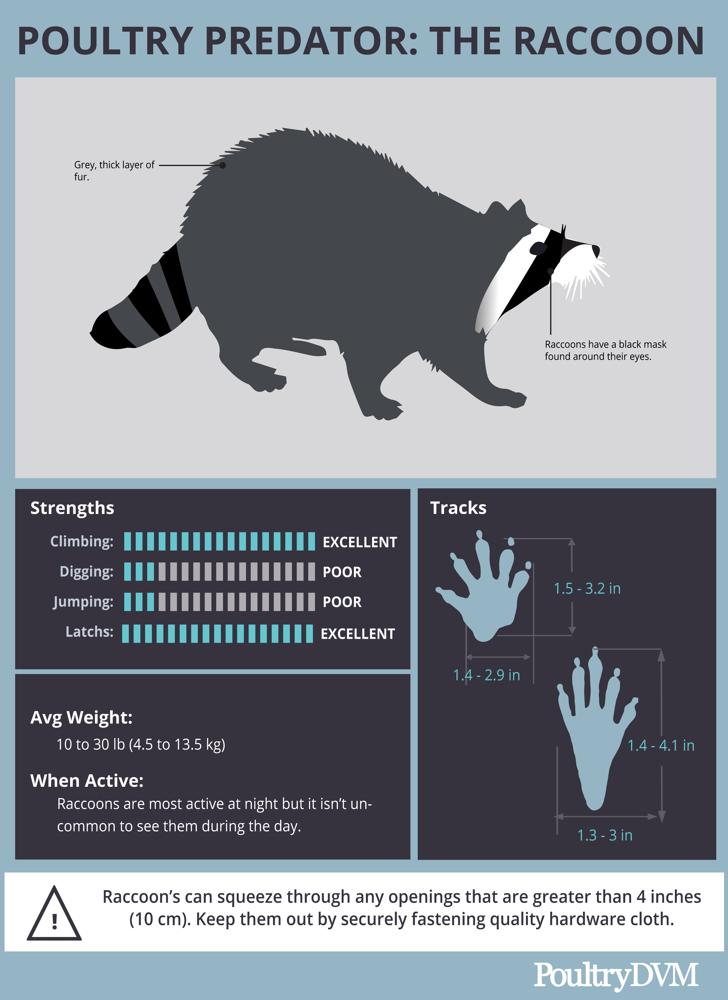 PoultryDVM Predator Profile - The Raccoon