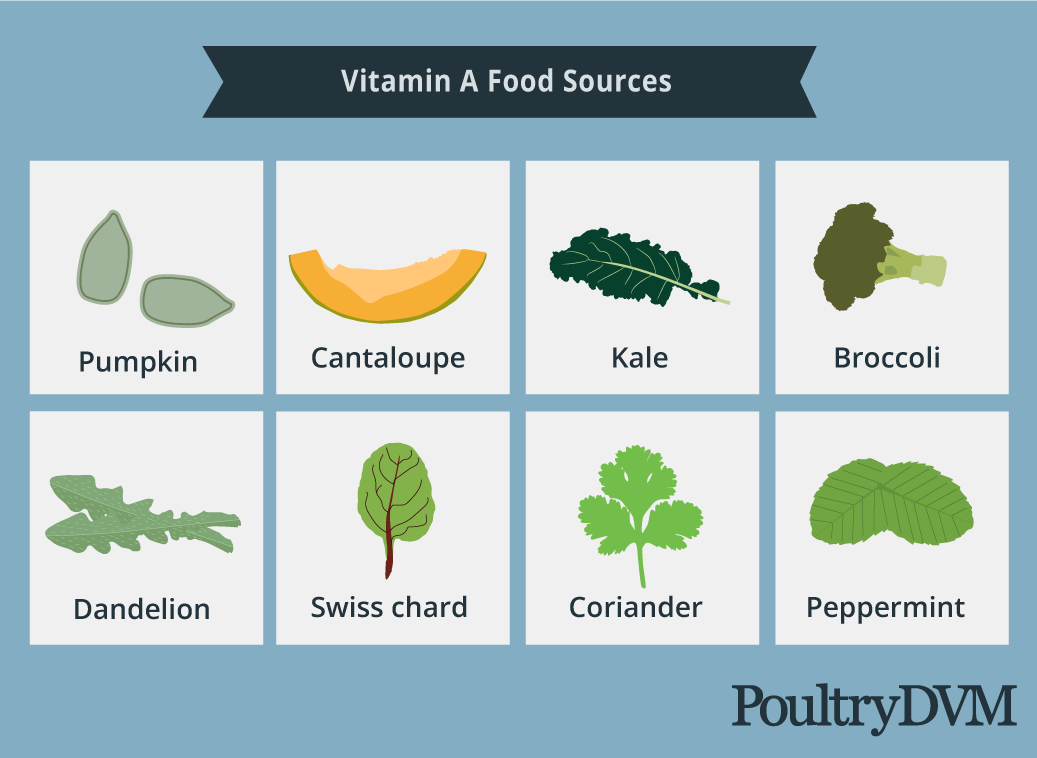 Vitamin A food sources for chickens