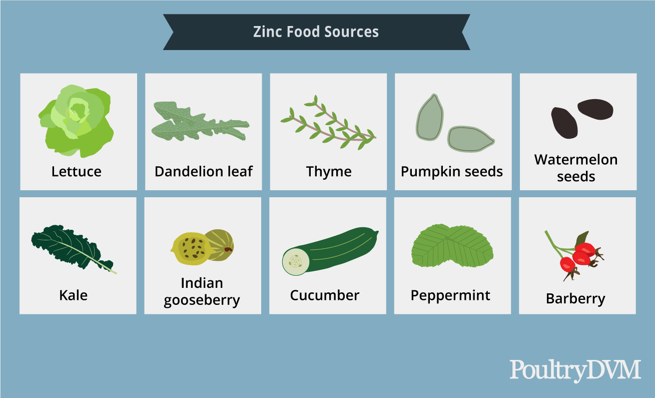 Sources of Zinc in diet