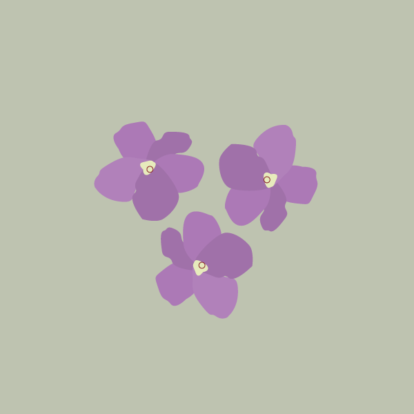 brunfelsia