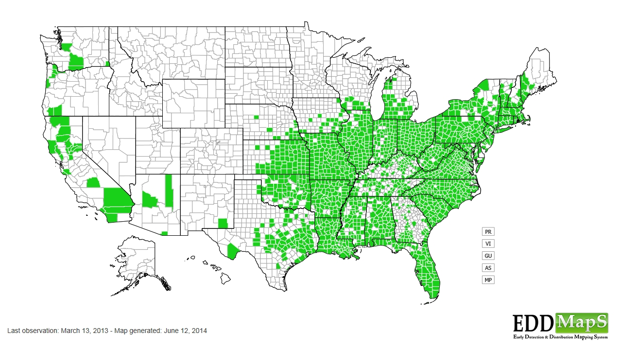 Pokeweed distribution - United States