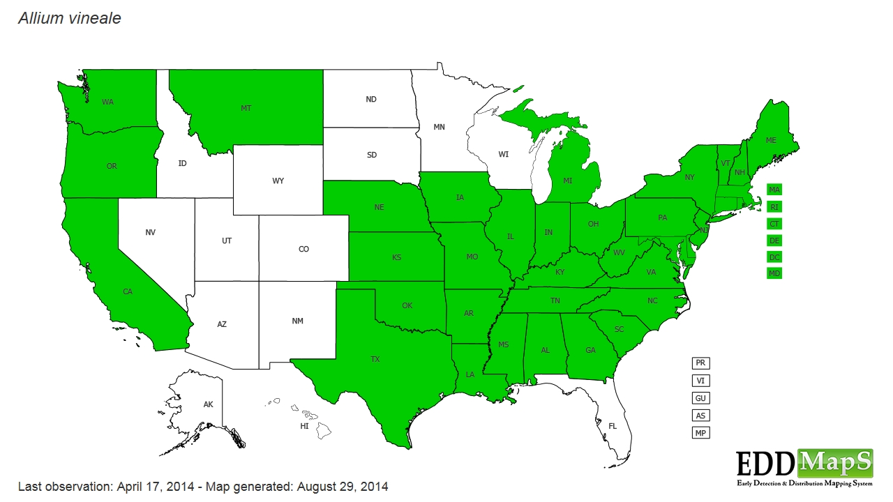 Green onion distribution - United States