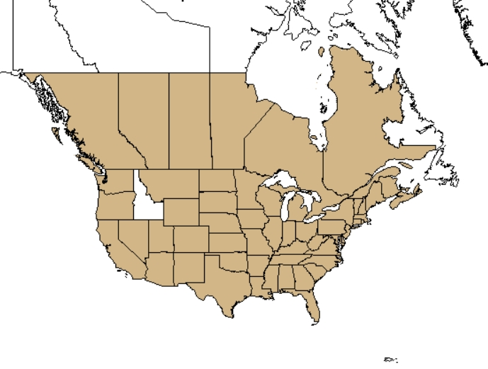 Accorns distribution - United States