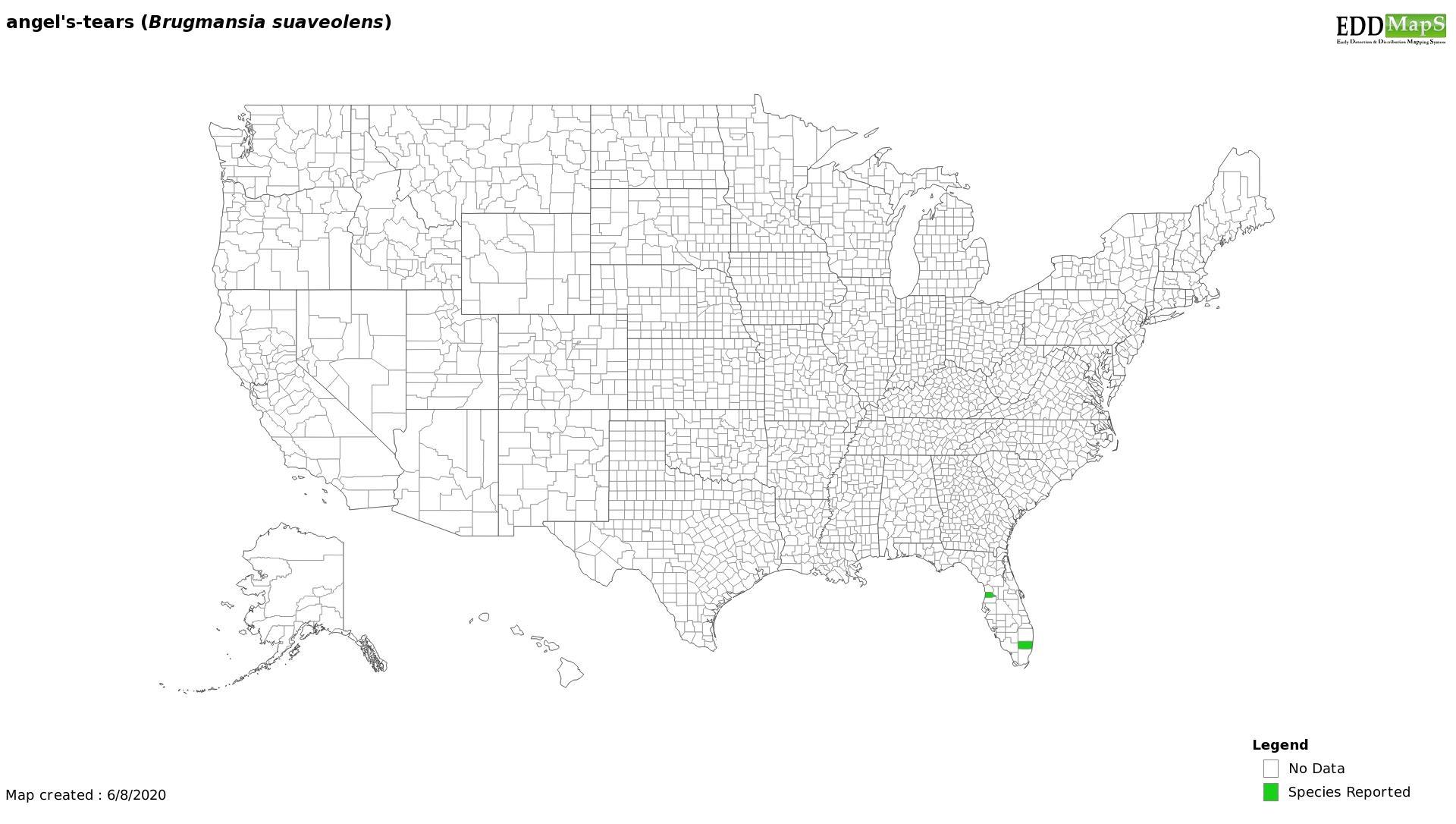 Angel's Trumpet distribution - United States