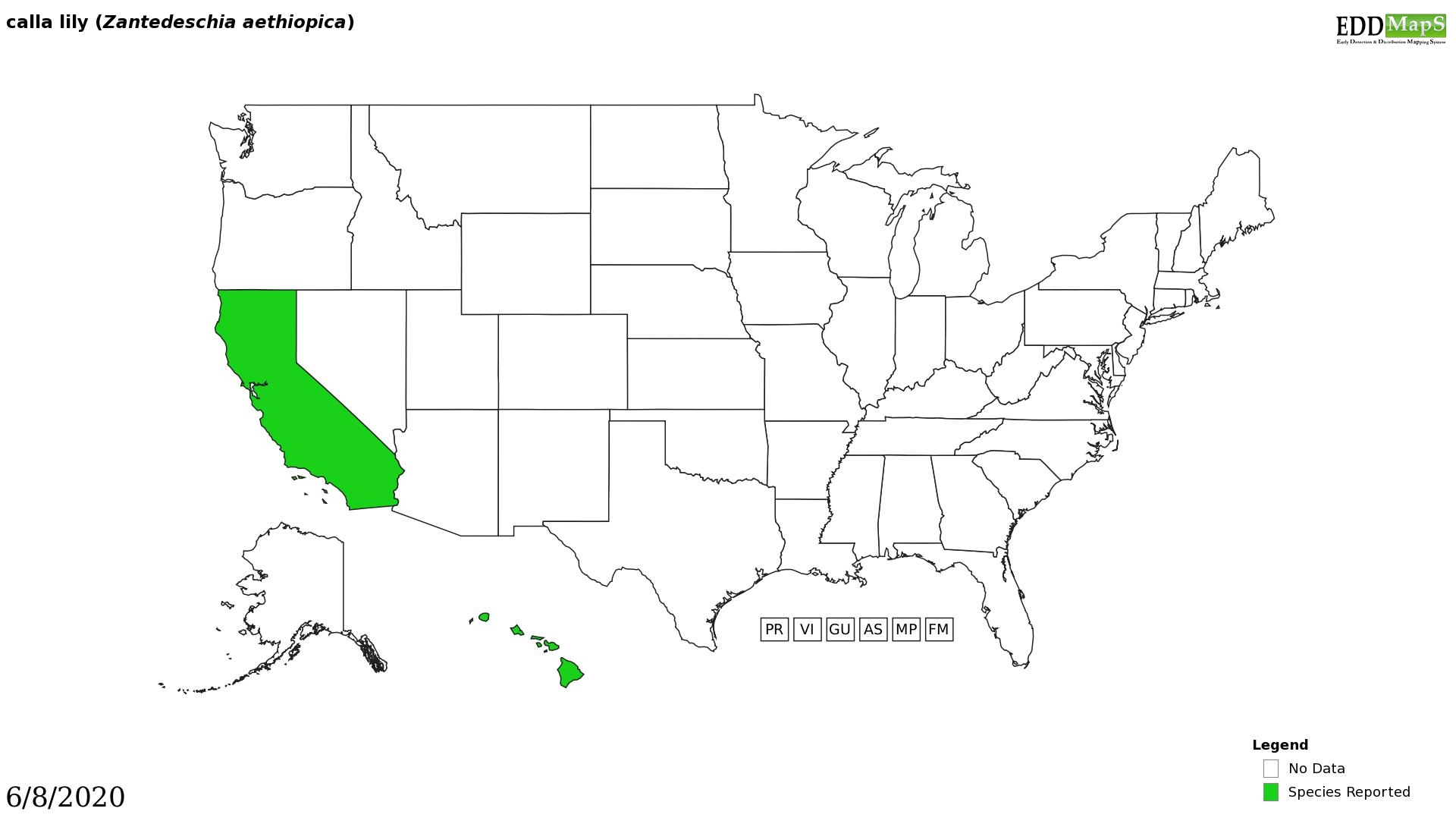 Calla lily distribution - United States