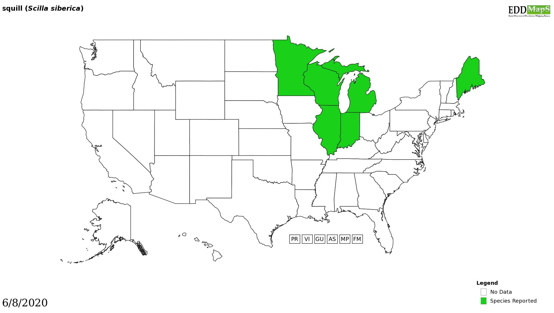 Squill distribution - United States
