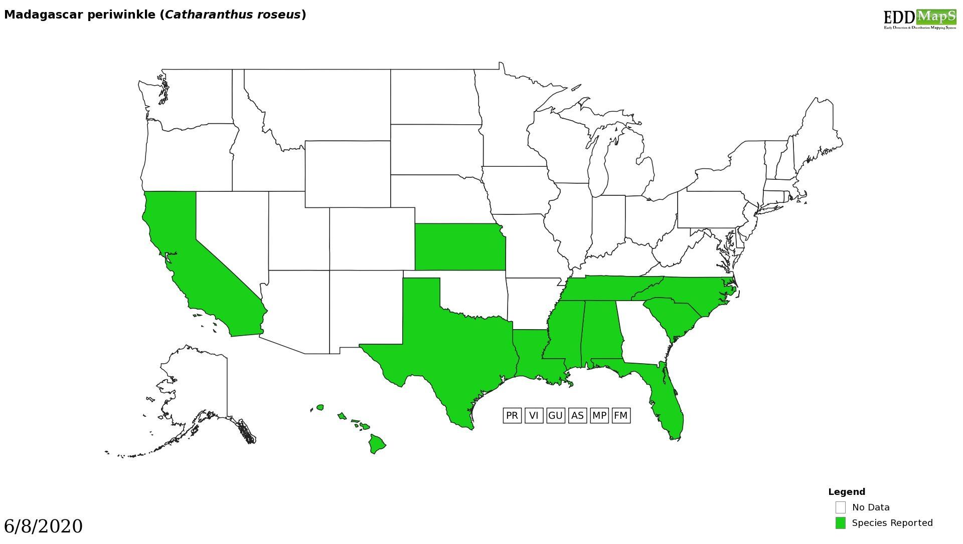 Madagascar periwinkle  distribution - United States