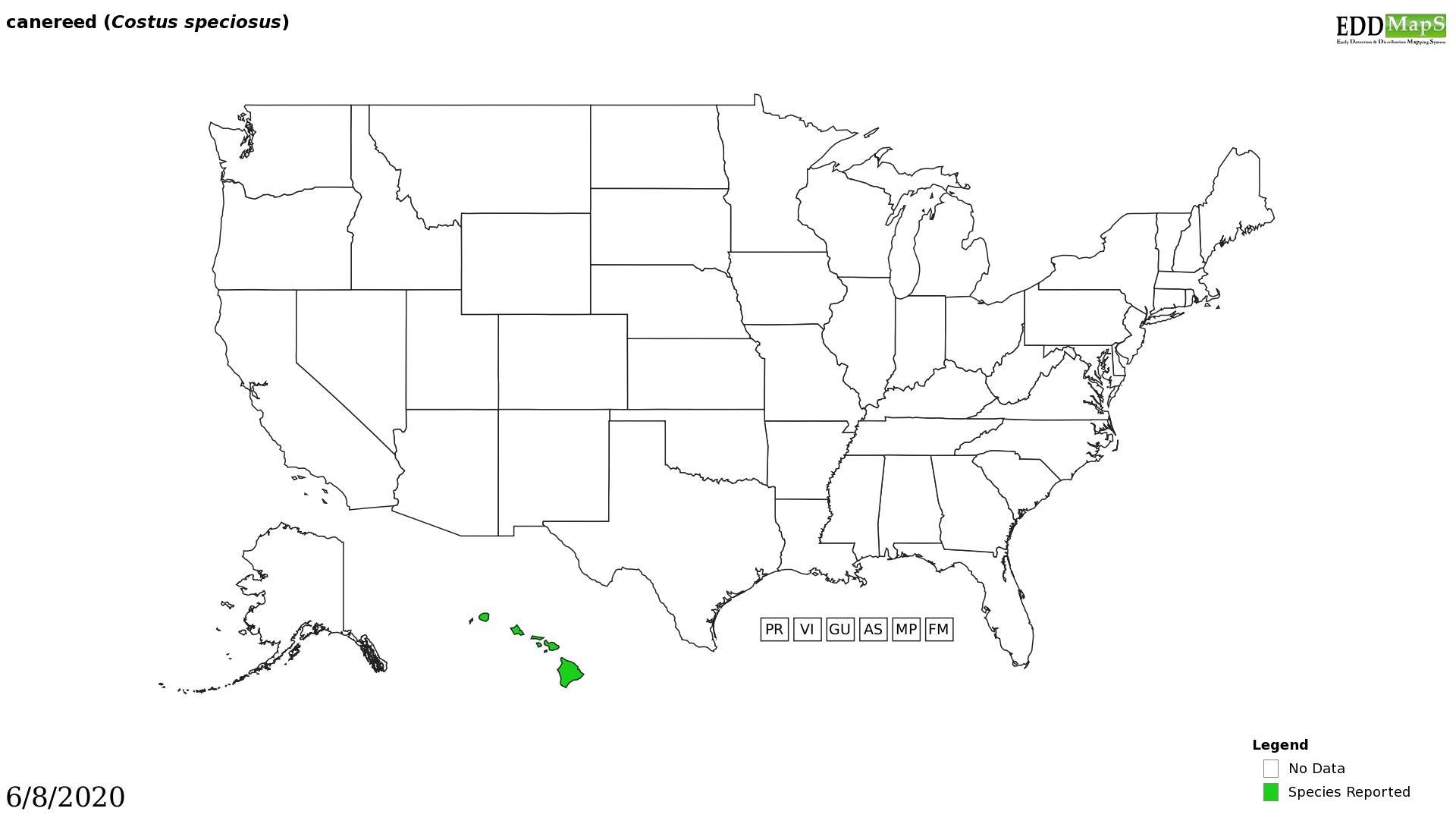 Crape ginger distribution - United States