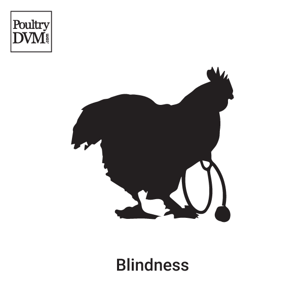 Blindness in Chickens