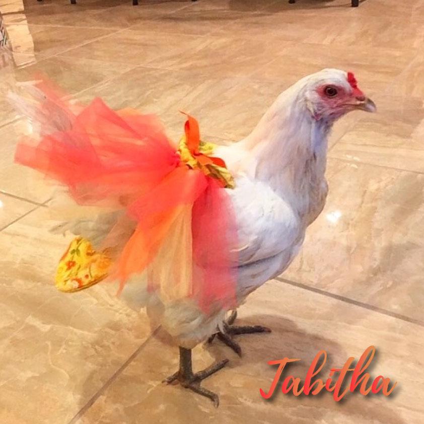 Tabitha photograph