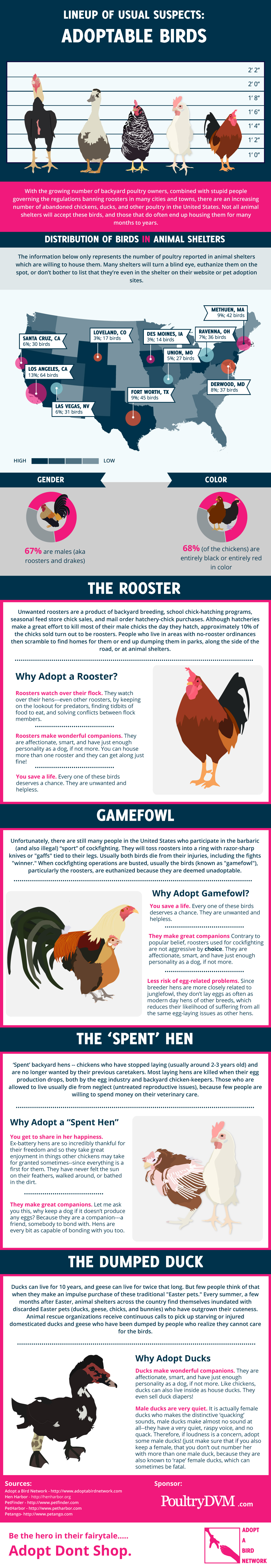 PoultryDVM - Lineup of Usual Suspects: Adoptable Birds