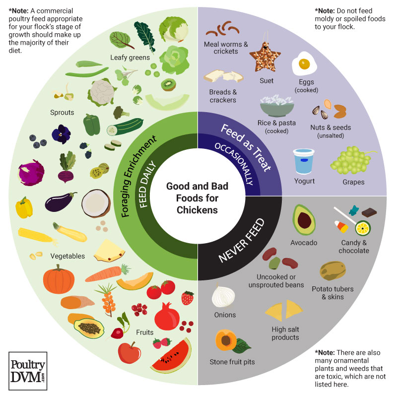 PoultryDVM - Chart: Good and Bad Foods for Chickens