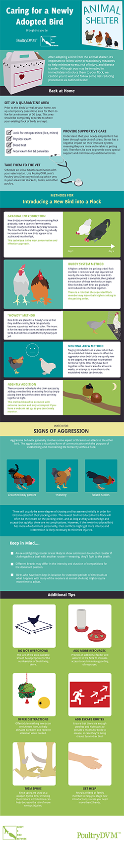 Caring for your Newly Adopted Chicken