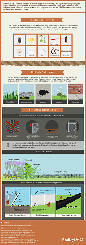 Dealing with Ratsnakes Infographic