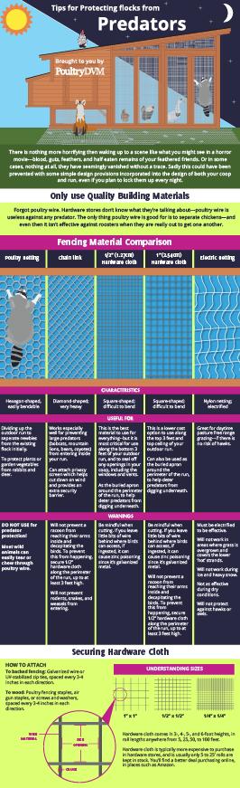 Tips for Protecting Backyard Flocks from Predators