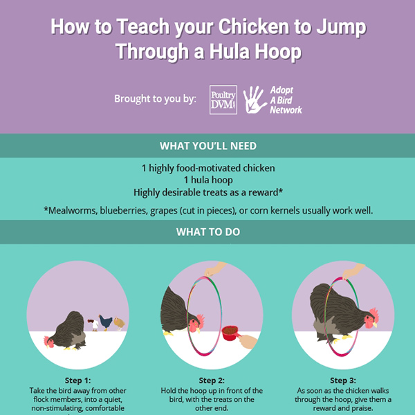 How to Train your Chicken to Jump Through a Hula Hoop