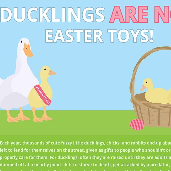 Ducklings are NOT Easter Toys