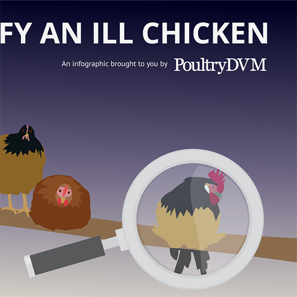 How to Identify a Sick Chicken