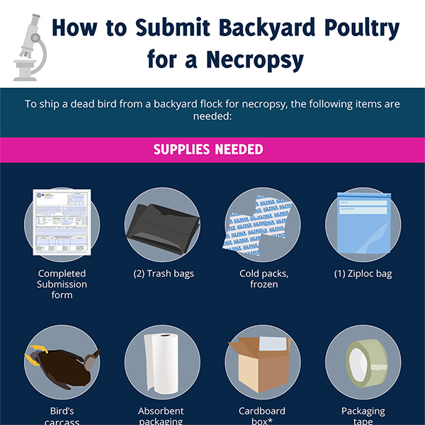 Submitting Backyard Poultry for a Necropsy