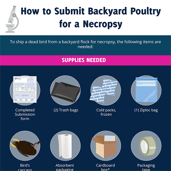 How to Submit Backyard Fowl for a Necropsy