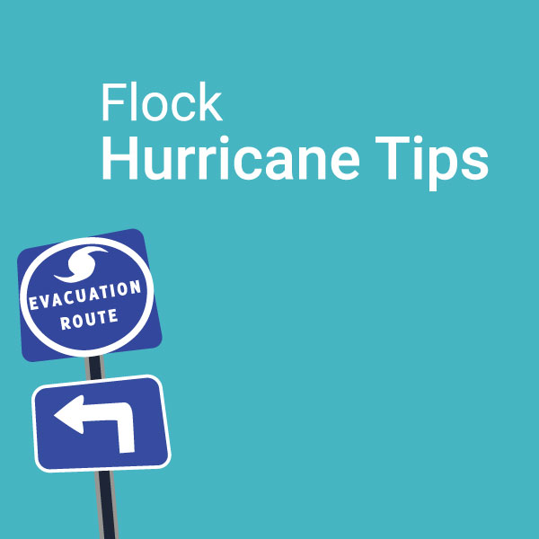 What to do with your Chickens During a Hurricane