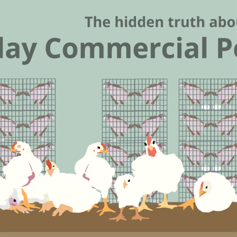 Modern Day Poultry Production