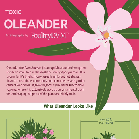 Toxic Oleander