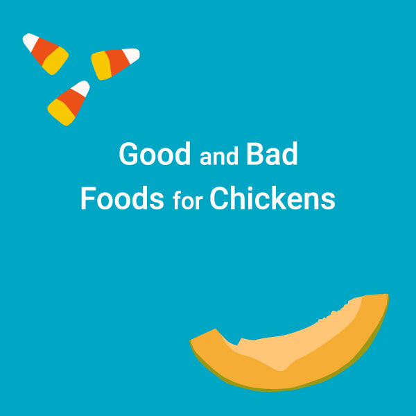 Chart: Good and Bad Foods for Chickens