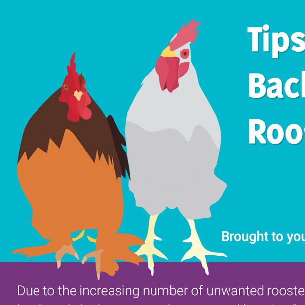 Tips for Keeping Bachelor Flocks