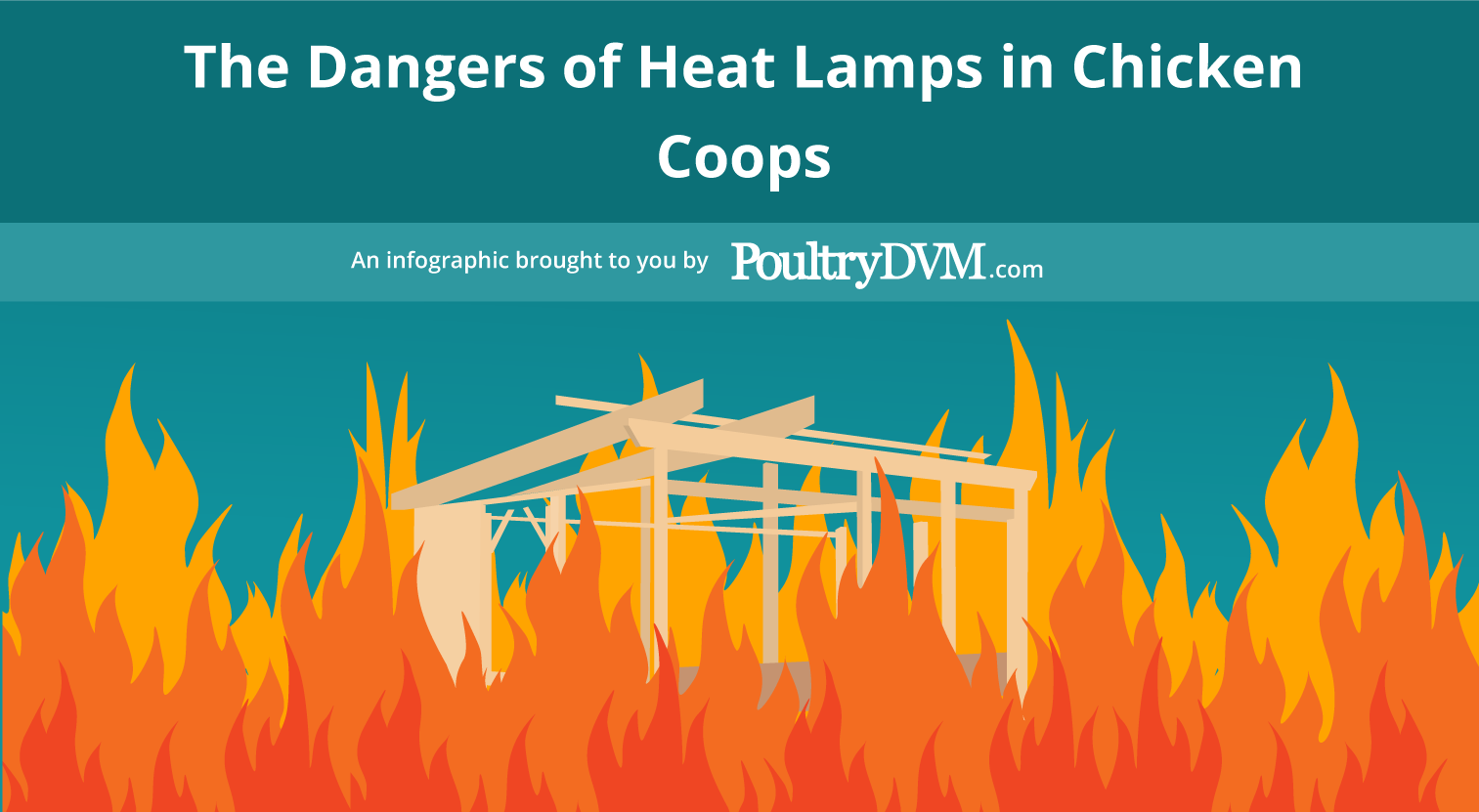 The Dangers Of Heat Lamps In Chicken Coops Poultrydvm Infographic