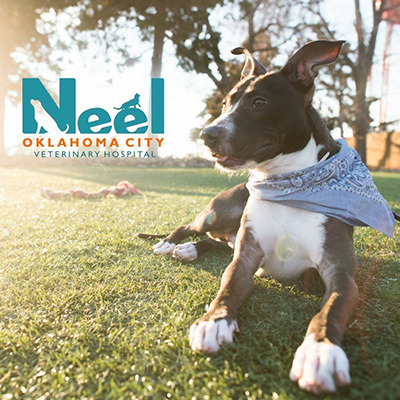 Neel Veterinary Hospital
